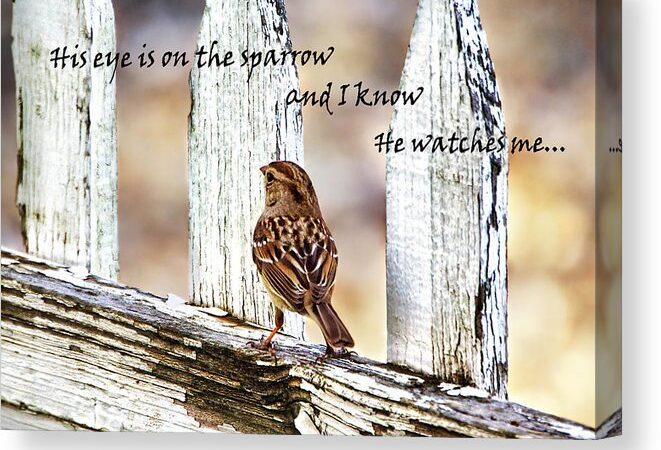 God's Eye is on the Sparrow